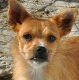 Protection des animaux: Animaux à adopter - Annonces Chouchou%202_small