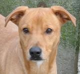 Protection des animaux: Animaux à adopter - Annonces Dingo_small
