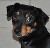 Protection des animaux: Animaux à adopter - Annonces - Page 5 Loustique%203_small