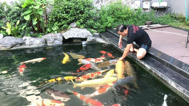 Diễn đàn rao vặt tổng hợp: Giới thiệu về hệ thống lọc cho hồ cá Thiet-ke-ho-ca-koi-tai-sai-gon-0