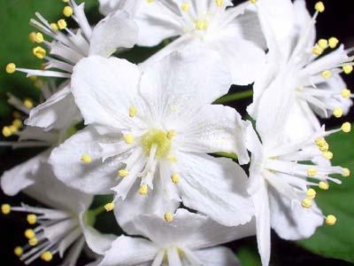 Cvetna oaza Flowers_med