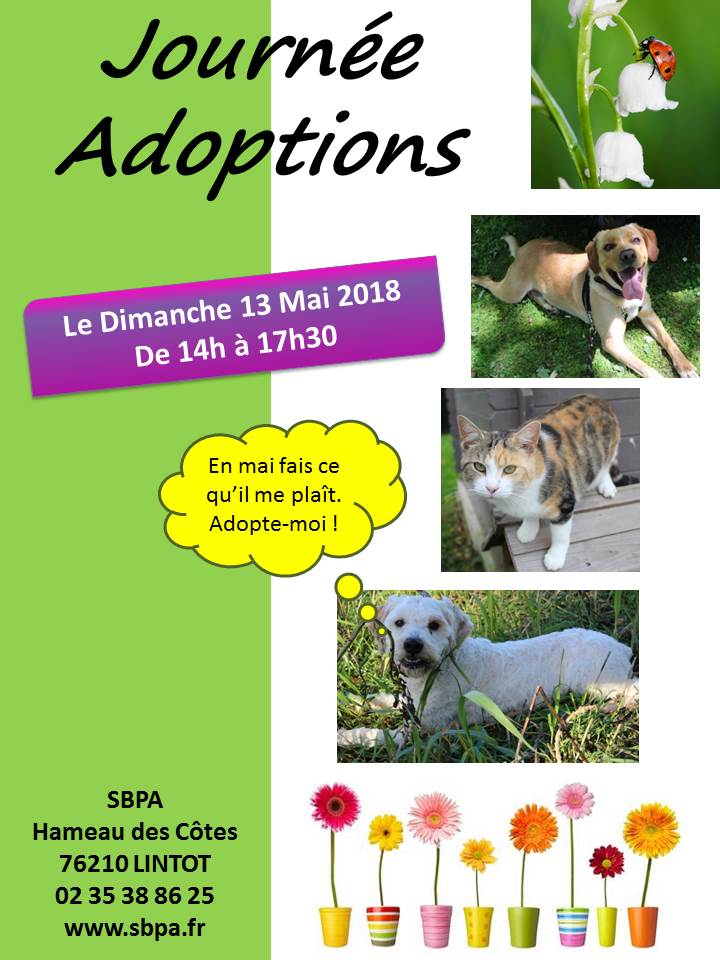 SHERKAN - x labrador 4 ans - SBPA à Lintot (76) Journe_adoptions_mai