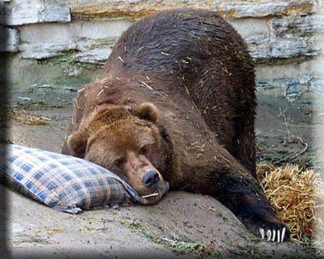 Zemlje bivše SFRJ gospodarski ne mogu jedna bez druge - Page 4 Sleeping-Bear