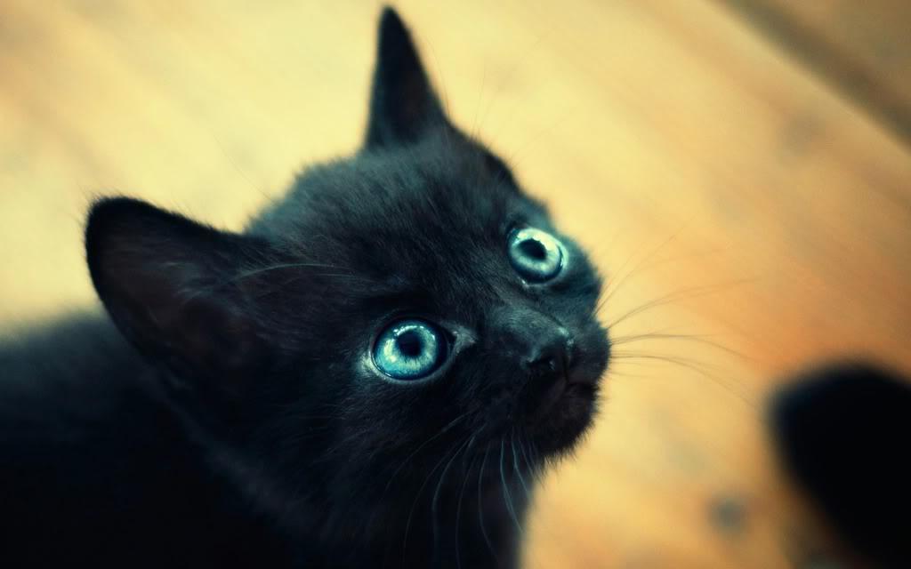 ¿A qué forero extrañas? Gatito-negro