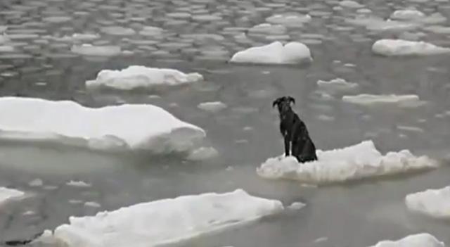 ¡¡¡ ATRAPAD@S EN EL HIELO... Pescador-ruso-rescata-perro-hielo