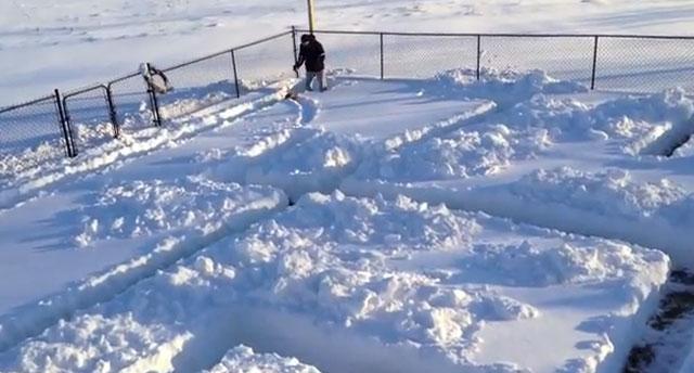 ANIMALES - Página 2 Perro-laberinto-de-nieve
