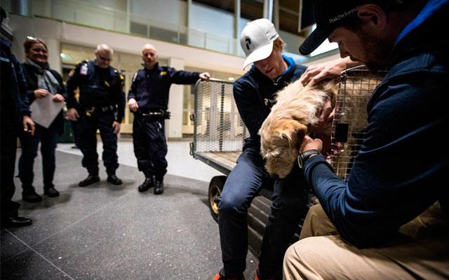 ANIMALES - Página 3 Arthur-perro-maraton-Ecuador