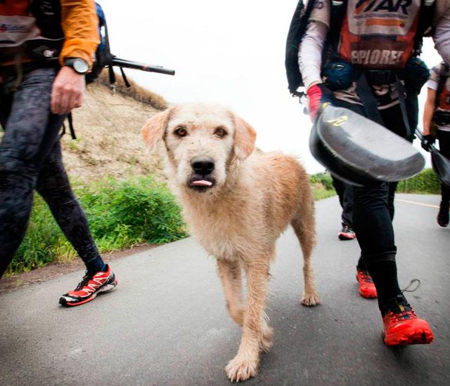 ANIMALES - Página 3 Arthur-perro-ayudado-selva-ecuador