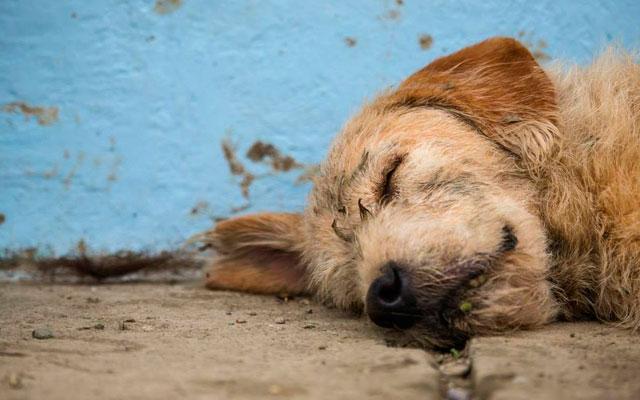 ANIMALES - Página 3 Hombre-adopta-perro-competicion-ecuador