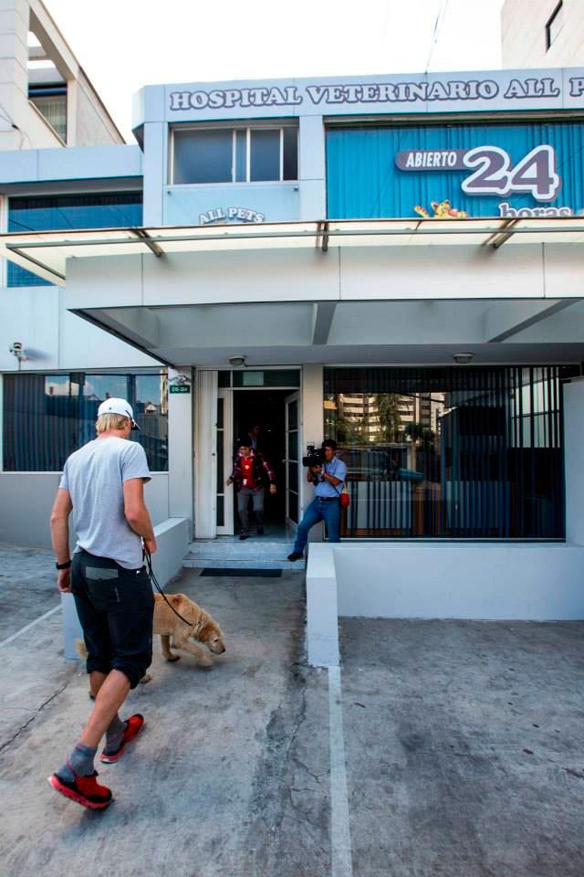 ANIMALES - Página 3 Perro-arthur-ayudado-selva-ecuador