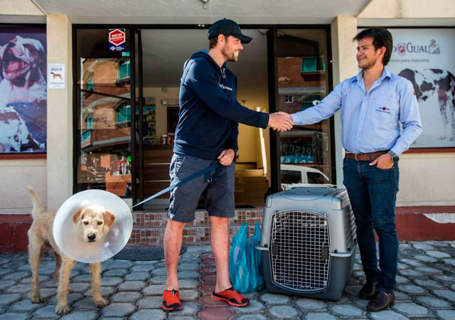 ANIMALES - Página 3 Perro-callejero-ecuador-maraton