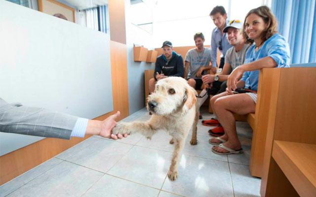 ANIMALES - Página 3 Perro-encontrado-selva-ecuador-adoptado