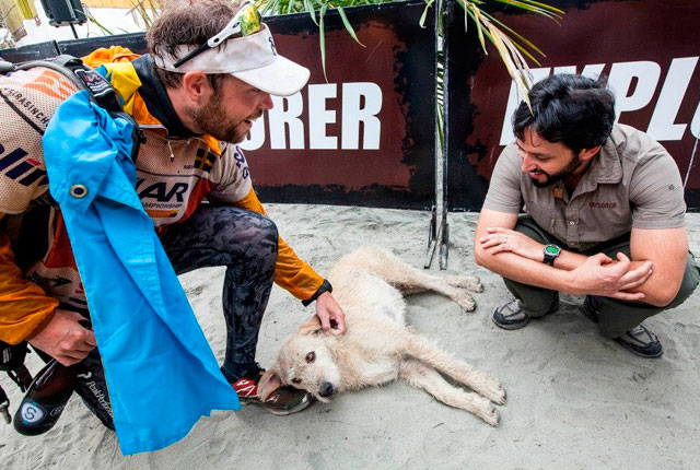 ANIMALES - Página 3 Perro-selva-ecuador