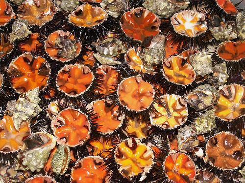 Chiacchiere... - Pagina 37 1269644633_sea_urchins