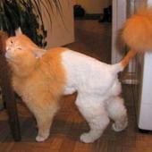 Прикольные истории о котах Cats-9