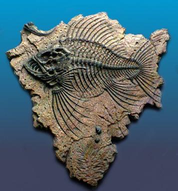 Fossil    الأحفورة    ..... الأحافير  Fossil_fish