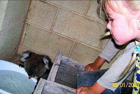 thread sull'AMICIZIA tra specie diverse Koala_05