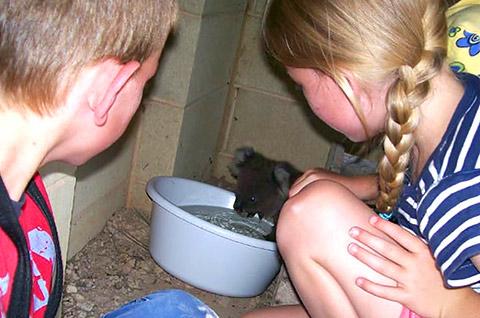 thread sull'AMICIZIA tra specie diverse Koala_06
