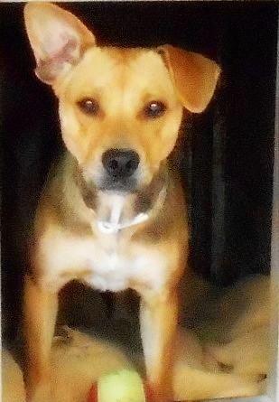 LINETT - x beagle 5 ans   (2 ans de refuge) - ASCPA à Perpignan (66) 500_2eea15694a663d53248d2fc0b24e62cc