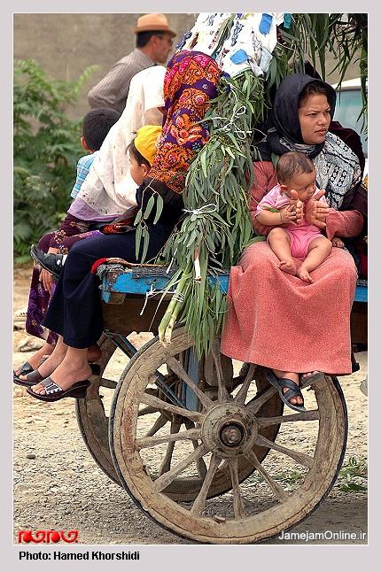 عروسی سنتی تركمن ها به روایت تصویر L00906394252