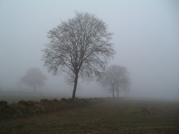 Kroz maglu...  - Page 2 Nebel1