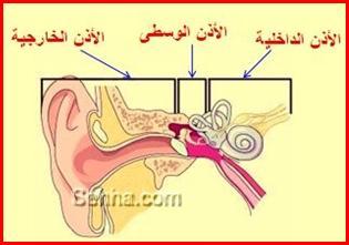 شرح كامل ومفصل لأذن الانسان External-otitis01