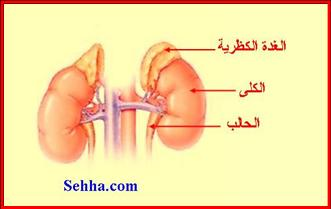 أمراض الغدد الصم Endocrine disorders Addison02