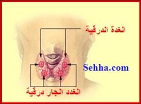 أمراض الغدد الصم Endocrine disorders HPthyroidism01