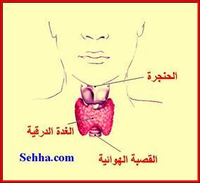 أمراض الغدد الصم Endocrine disorders HPthyroidism02