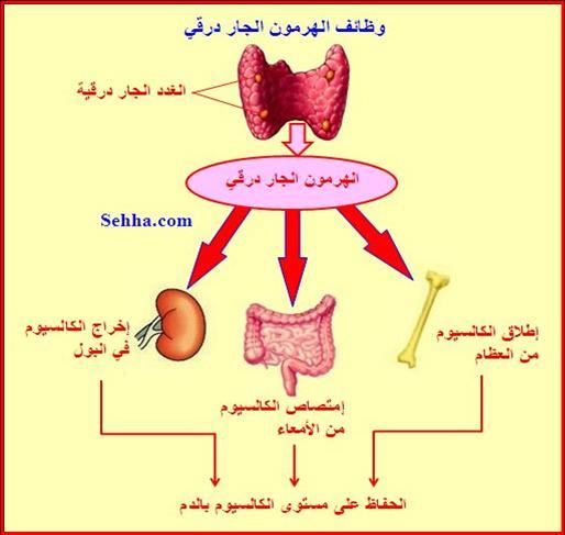 أمراض الغدد الصم Endocrine disorders HPthyroidism04