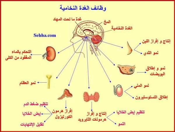 أمراض الغدد الصم Endocrine disorders Hypopituitarism02