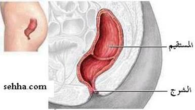 الجهاز الهضمي Digestive system Anus