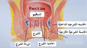 الجهاز الهضمي Digestive system Anus2