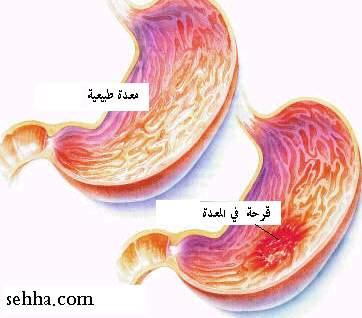 الجهاز الهضمي Digestive system S1