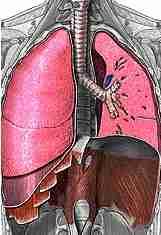 أمراض الجهاز التنفسي Respiratory tract Rt1a
