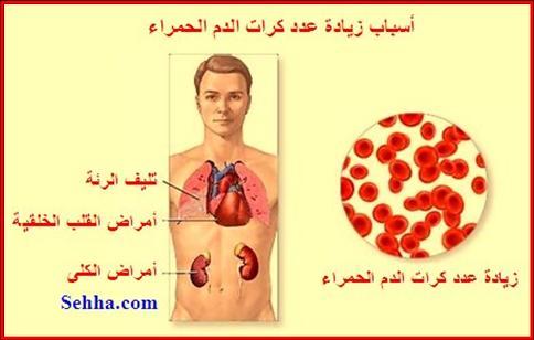 معلومات مهمة عن تحليل الدم. CBC04
