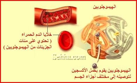 الحديد و طفلك(iron and your child)..... Iron-and-Child