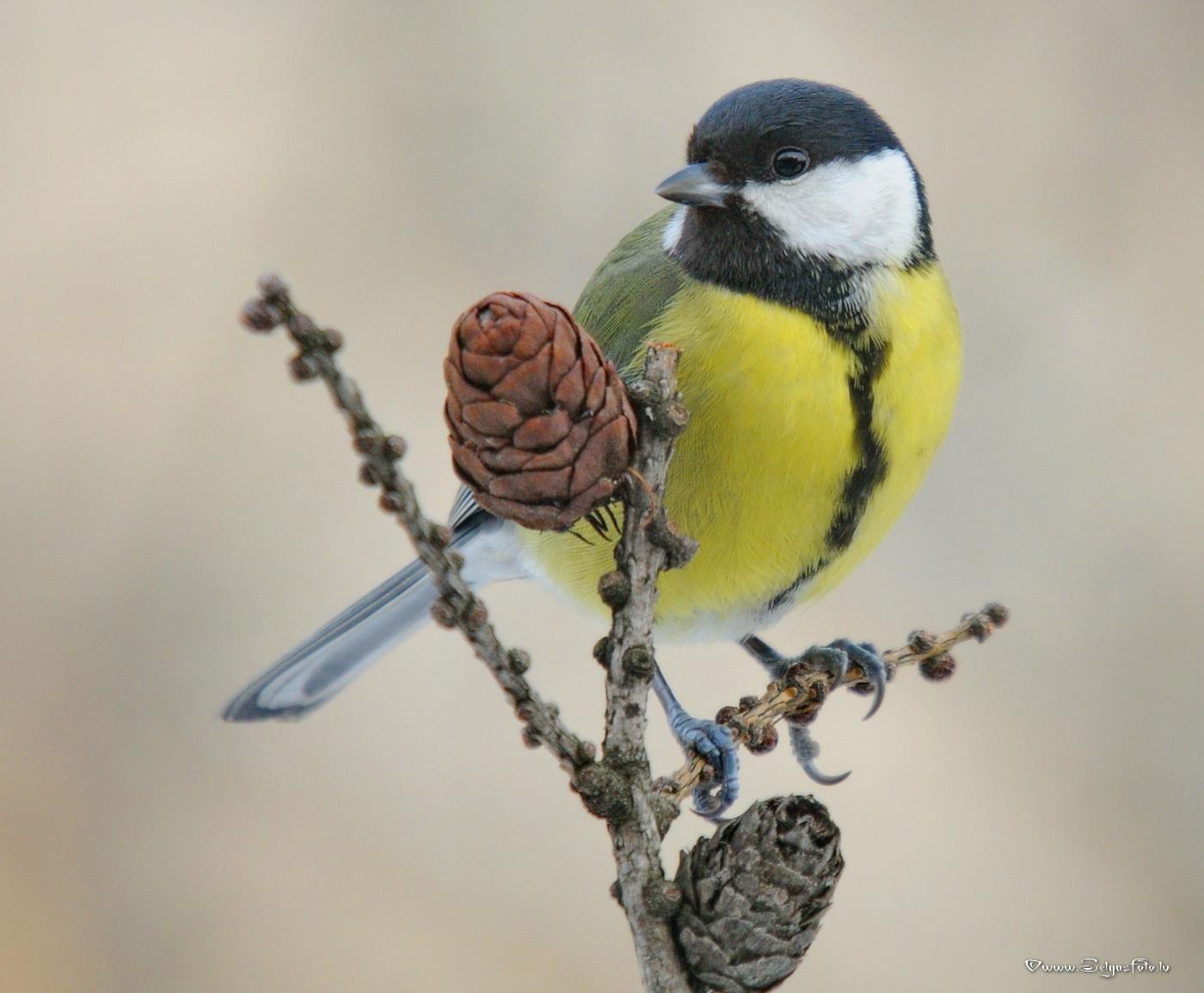 Lietderīga informācija par dzīvniekiem un putniem, online web kameras 17.01.12_042sf