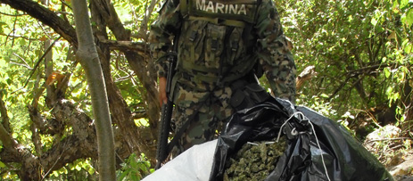 LA ARMADA DE MÉXICO ERRADICA 220 PLANTÍOS Y 33 SECADEROS Foto_04