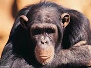 Il 2/Due di PIC Scimmie_004x
