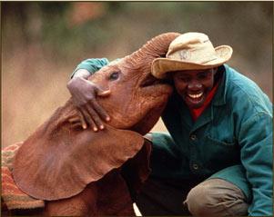 The David Sheldrick Wildlife Trust - Nursery per piccoli elefanti e rinoceronti Sheldricktrust_11