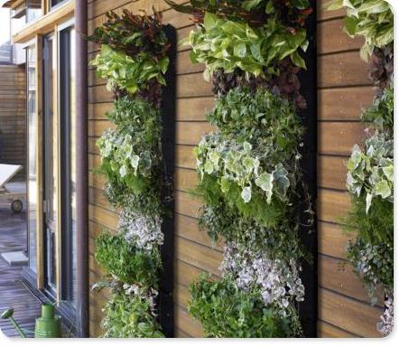 Vertical Garden beyond a Trellis Walls