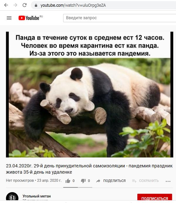 Бародинамика Шестопалова А.В. - Страница 20 Pandemiya_prazdnik_zhivota