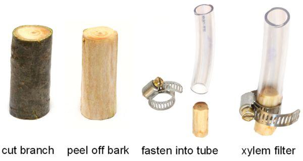 [Eau purification] Filtration avec une branche de pin PineBarkWaterFilterProcess