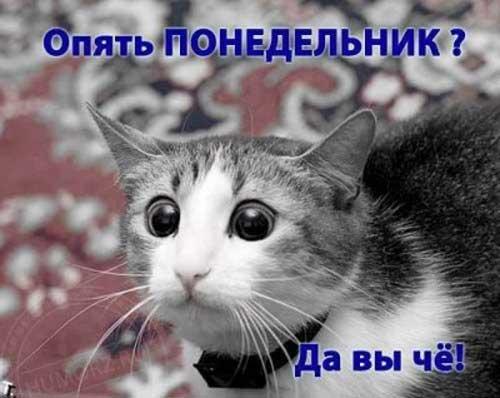 Маленький столик за углом - Том II Kot_ponedelnik_33