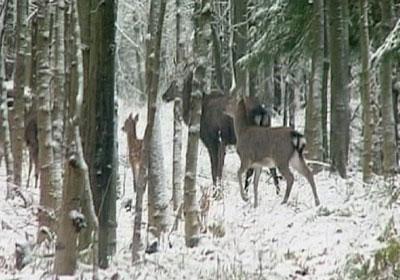 هجرة جماعية للحيوانات البرية فى أوكرانيا بسبب الصقيع  Wild-animals