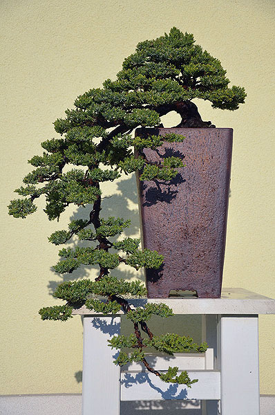 Bonsai stand table for Cascade 2011-04-23brin011a