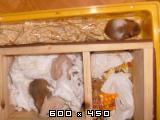 7 zlatih hrčkov S45623536