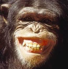MONO Chimp