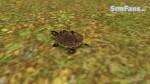 The Sims 3 Pets - Fotos de alguns animais 073-150x84